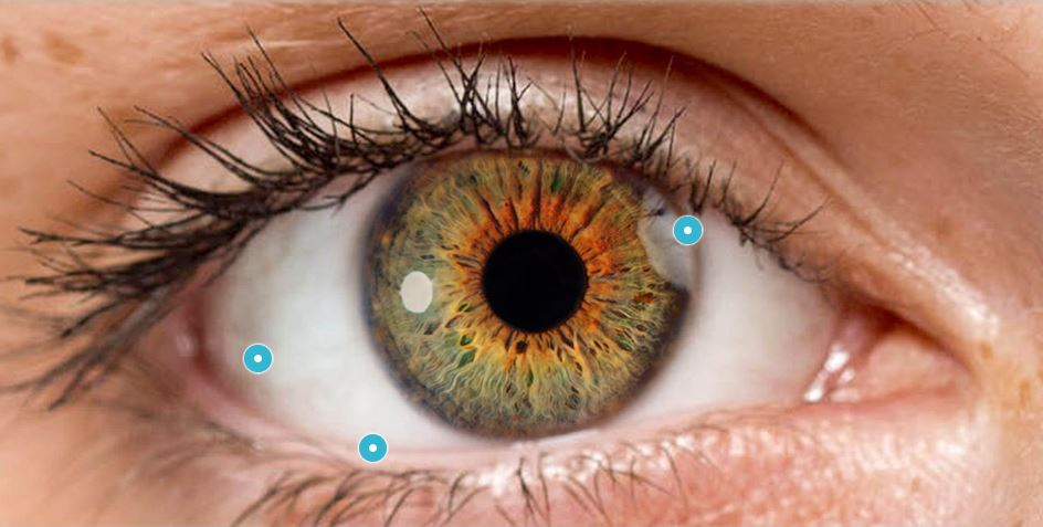 Explore Your Eyes with this Interactive Guide